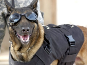 Doggles German Shepherd Malinois | The Lonely Tribalist