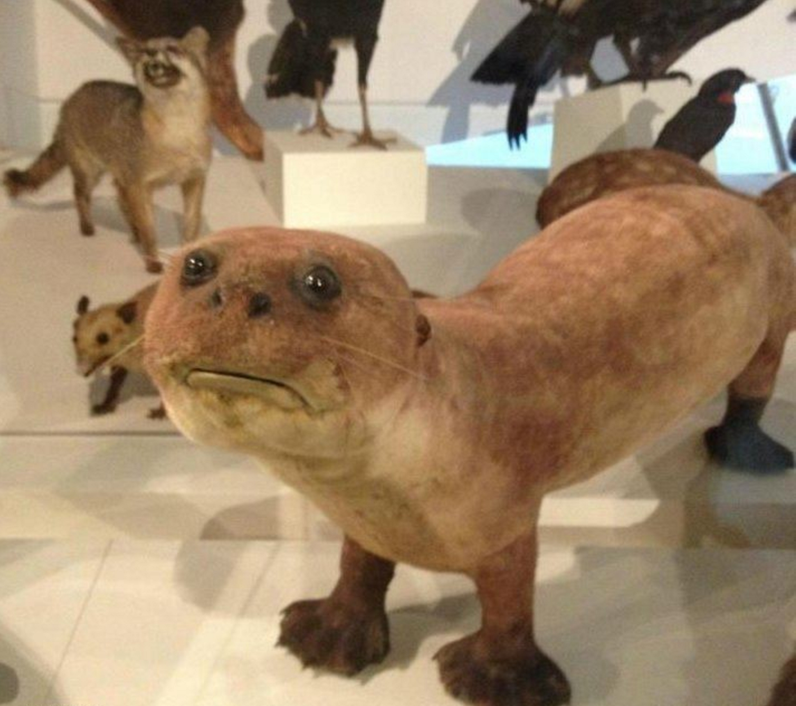bad taxidermy otter   The Lonely Tribalist
