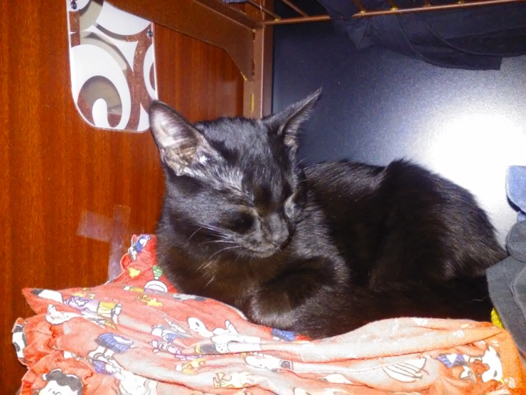 binx black cat sleeping in shelf | the lonely tribalist