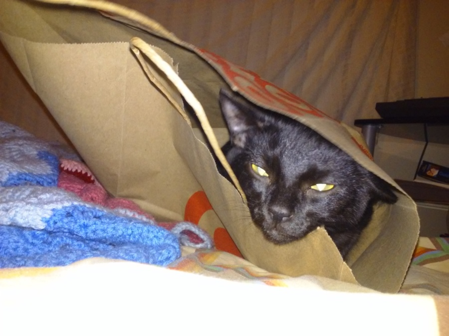 binx black cat in a paper grocery bag | the lonely tribalist