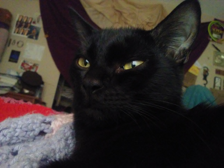 binx black cat yellow eyes face close up | the lonely tribalist