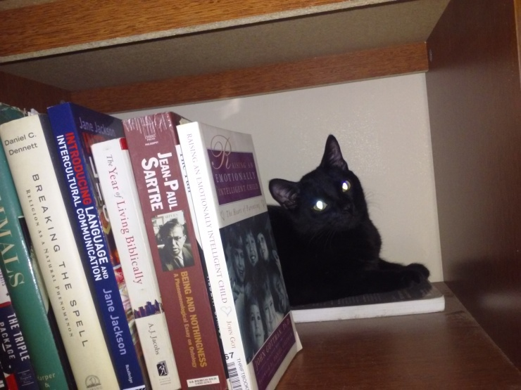 binx black cat on bookshelf | the lonely tribalist