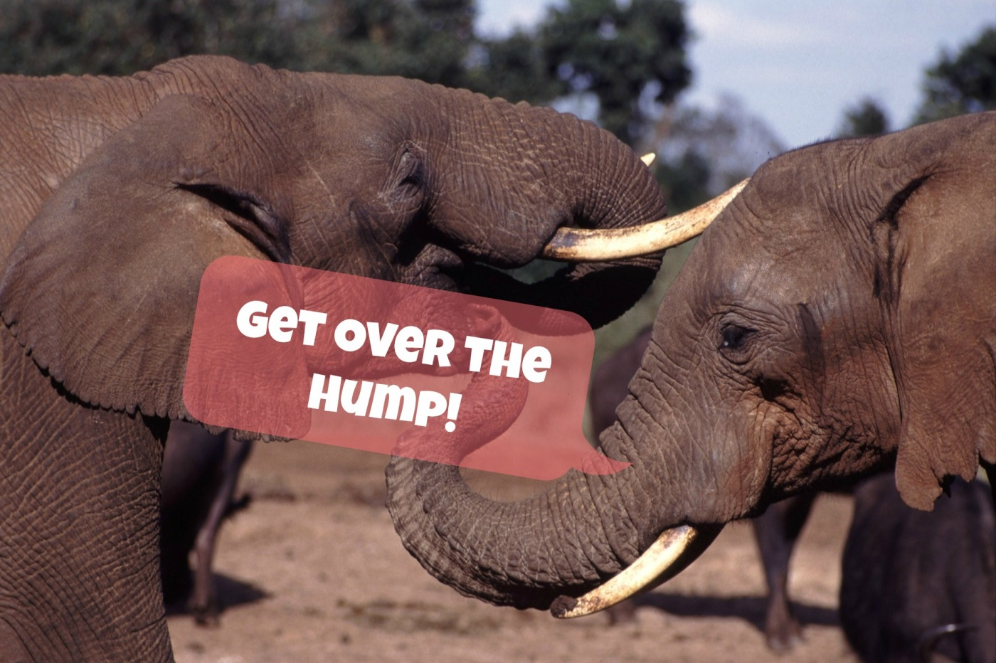 elephants get over the hump day banner | the lonely tribalist